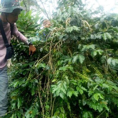 Indonesia Sumatra Organic Filter