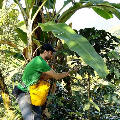 Colombia Kachalu Organic Espresso - Sachets Ese Servings Pads - 15 stuks