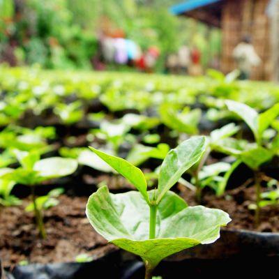 Peru Amazonas Cafeïnevrij Organic Espresso