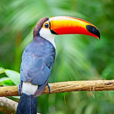 Panama Hartmann Birdsong Espresso