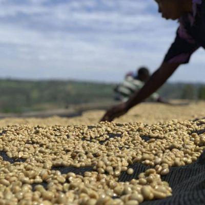 Rwanda Gatatu Washed Espresso - Limited Edition