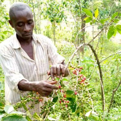 Rwanda Imbuto Natural Filter - Limited Edition