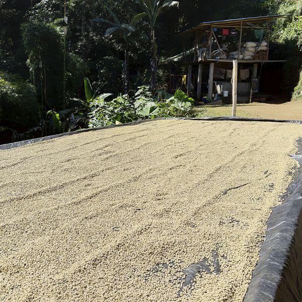 Colombia Cafeïnevrij Organic Kachalu Santander Espresso