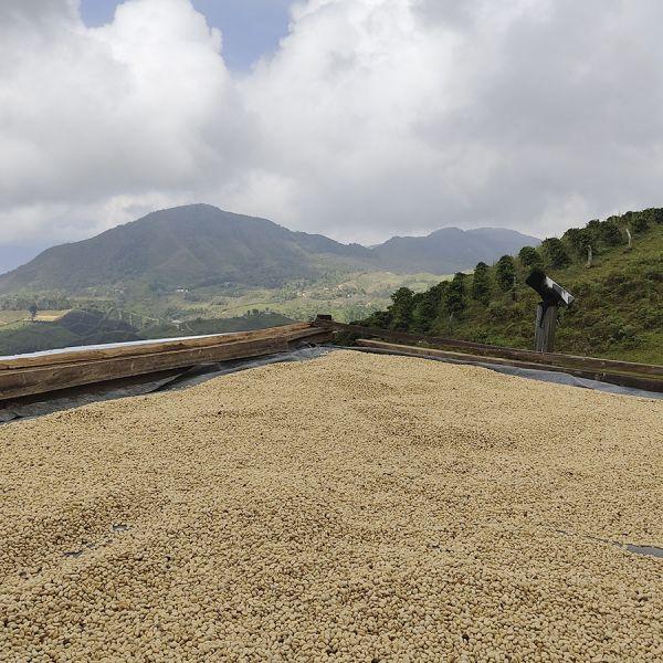 Colombia Dairo Heliberto C4P - Limited Edition - Espresso