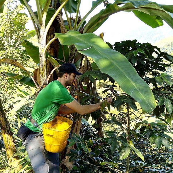 Colombia Kachalu Organic Filter