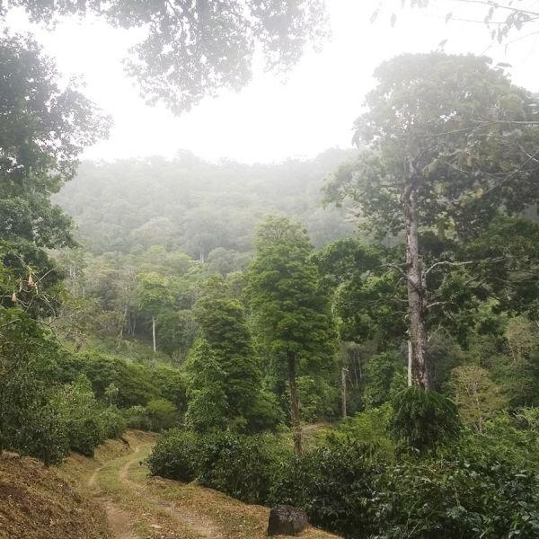 Panama Mi Finquita Lot: Casa Natural Filter - Ultra Limited